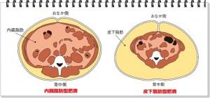 落とす 食事 を の 脂肪 お腹